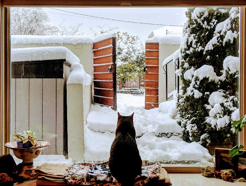 My cat watching the snow.